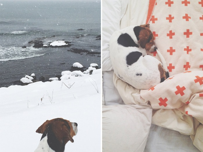 My Boy | Hope State Style | Paws New England | Photos by Caroline Goddard via Instagram @hopestatestyle