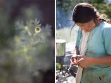 Natural Wool Dyes from Vermont Gardens, Meadows, & Hedgerows - A Workshop at the Marshfield School of Weaving   Caroline Goddard Photography   Hope State Style