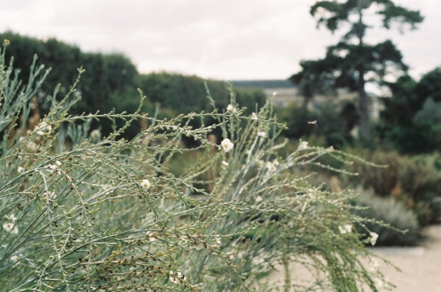 144France35mm_CarolineGoddard2015