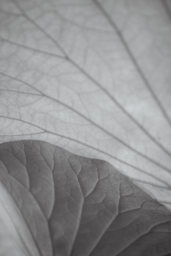 Lotus Study | HOPE STATE STYLE | Photos and musings by Caroline Goddard