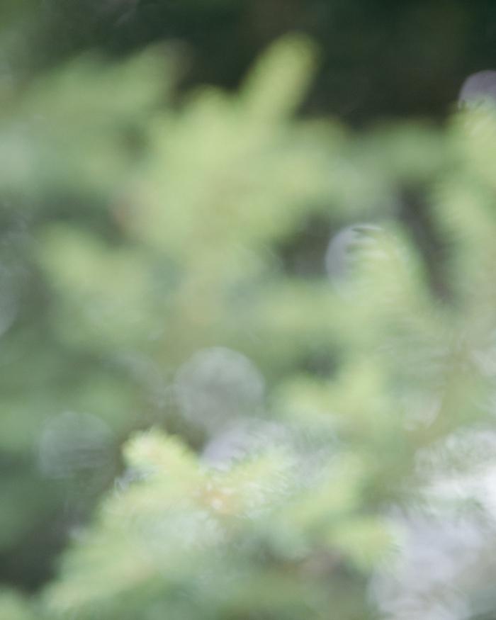 CarolineGoddard17-GreenStudies-0689